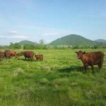 「かづの牛」のお話